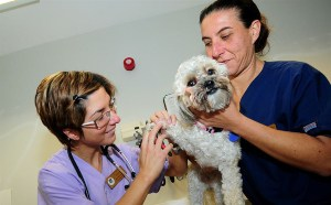 Dog Shot Schedule: All You Need To Know About Your Dog's Vaccinations