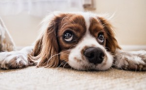 Why Does My Dog Scratch The Carpet? Behaviors and Solutions