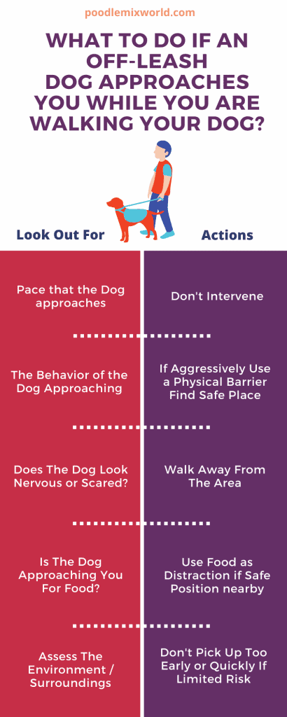 what-to-do-if-approached-by-an-off-leash-dog